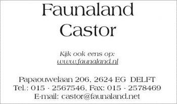 Faunaland castor